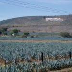 Meksyk i  alkohol z agawy